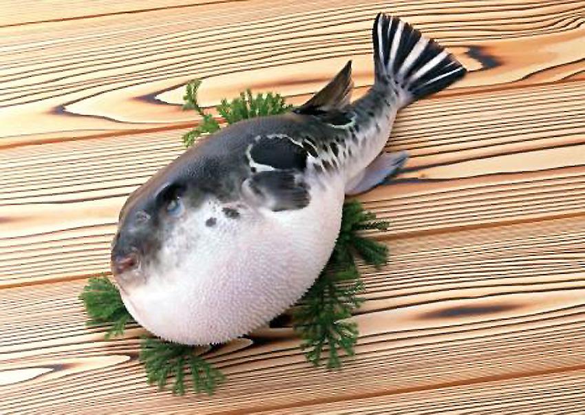 Matsuura Blowfish