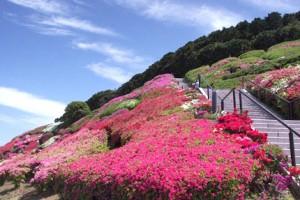 Mt.Furousan multi-purpose park