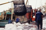 松浦魚市場水揚げ02